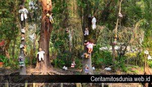 Beberapa Hutan Yang Dianggap Paling Angker di Dunia