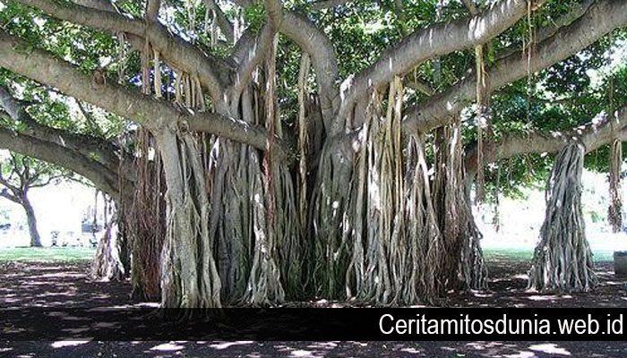 Mitos Tentang Pohon Beringin