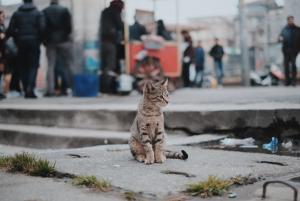 Menabrak-kucing-bikin-sial